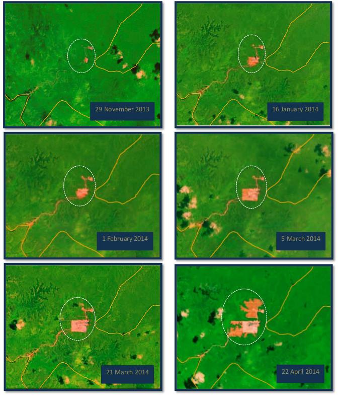 PT Permata Manunggal Perkasa Forest Clearance