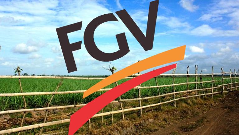FGV tebu