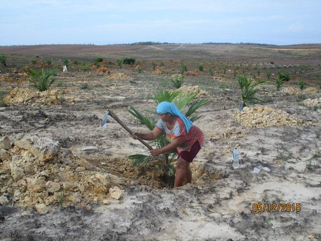 The Salim Group's Secret Plantations in West Papua